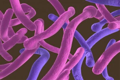 Tips to eliminate parasites